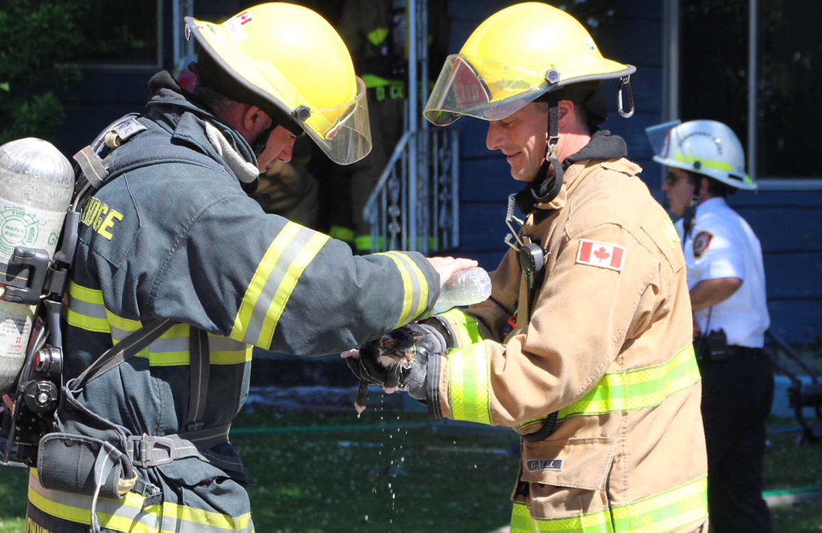 Firefighters bring water to rescued kitten. (Shane Mackichan photo)