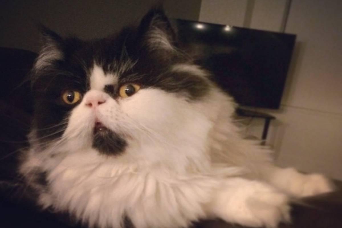 Breaking mews, it's International Cat Day