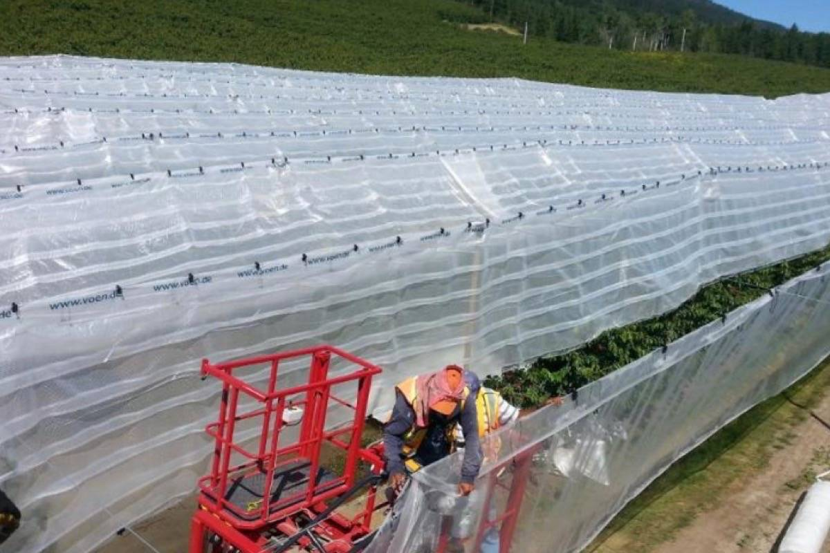 Orchard covers and wind machines are tested to protect cherry crop at Coral Beach Farms in Lake Country, 2017. (B.C. government)
