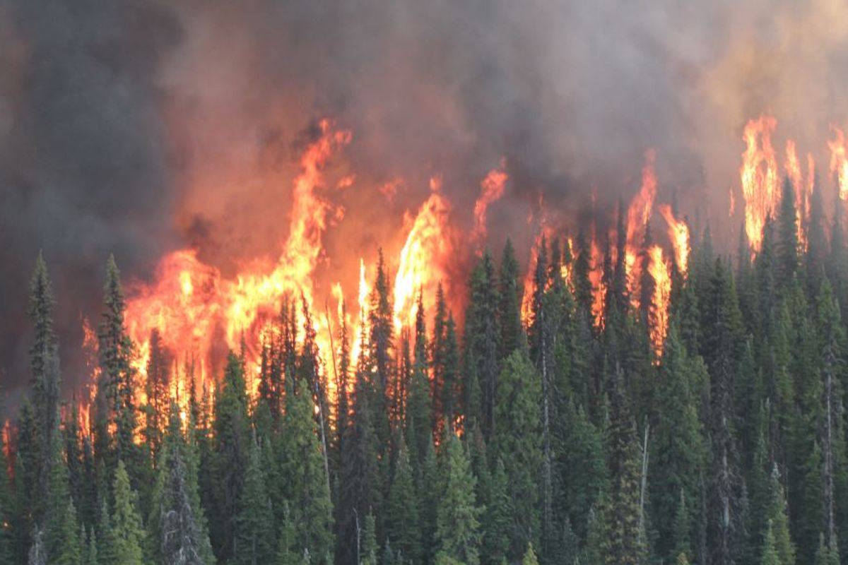 An emergency management company, Safeguard, was deployed to help at the Shovel Lake fire then sent home three days later by BC Wildfire Service. (Photo Black Press)