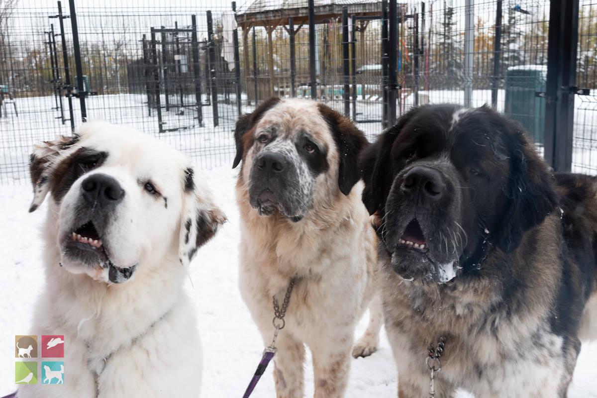 Image: Edmonton Humane Society