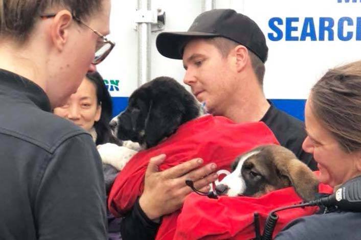 Two puppies saved after being trapped on a B.C. cliff for days
