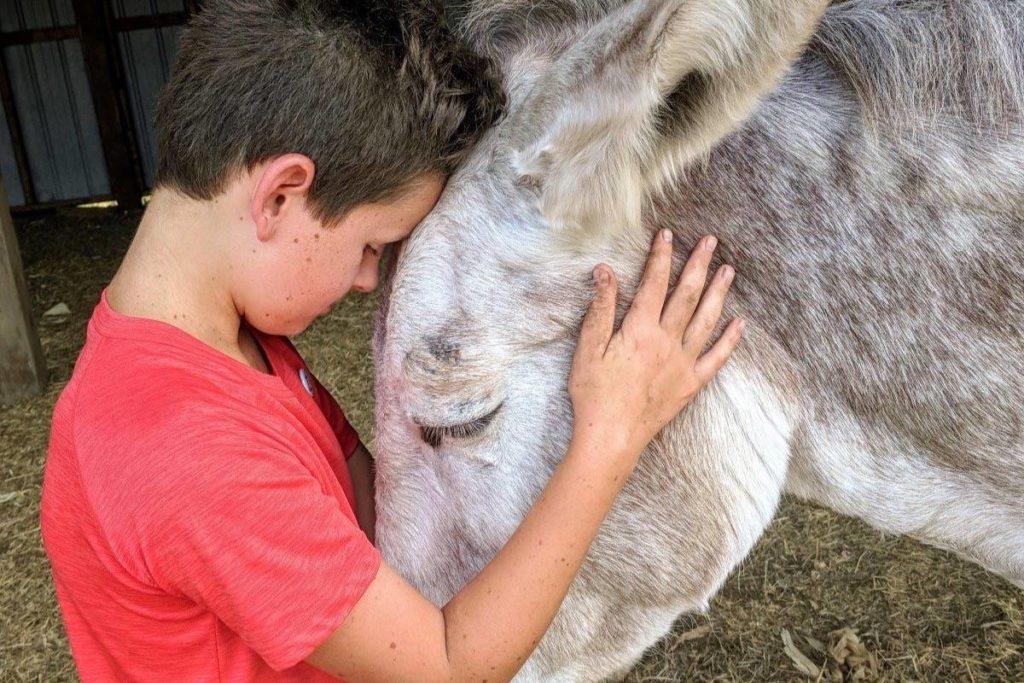 Matthew Farden spends five hours each week at The Happy Herd. Courtesy Matthew Farden