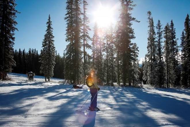 Lake Louise ski resort to appeal $2.1M fine for chopping down endangered trees