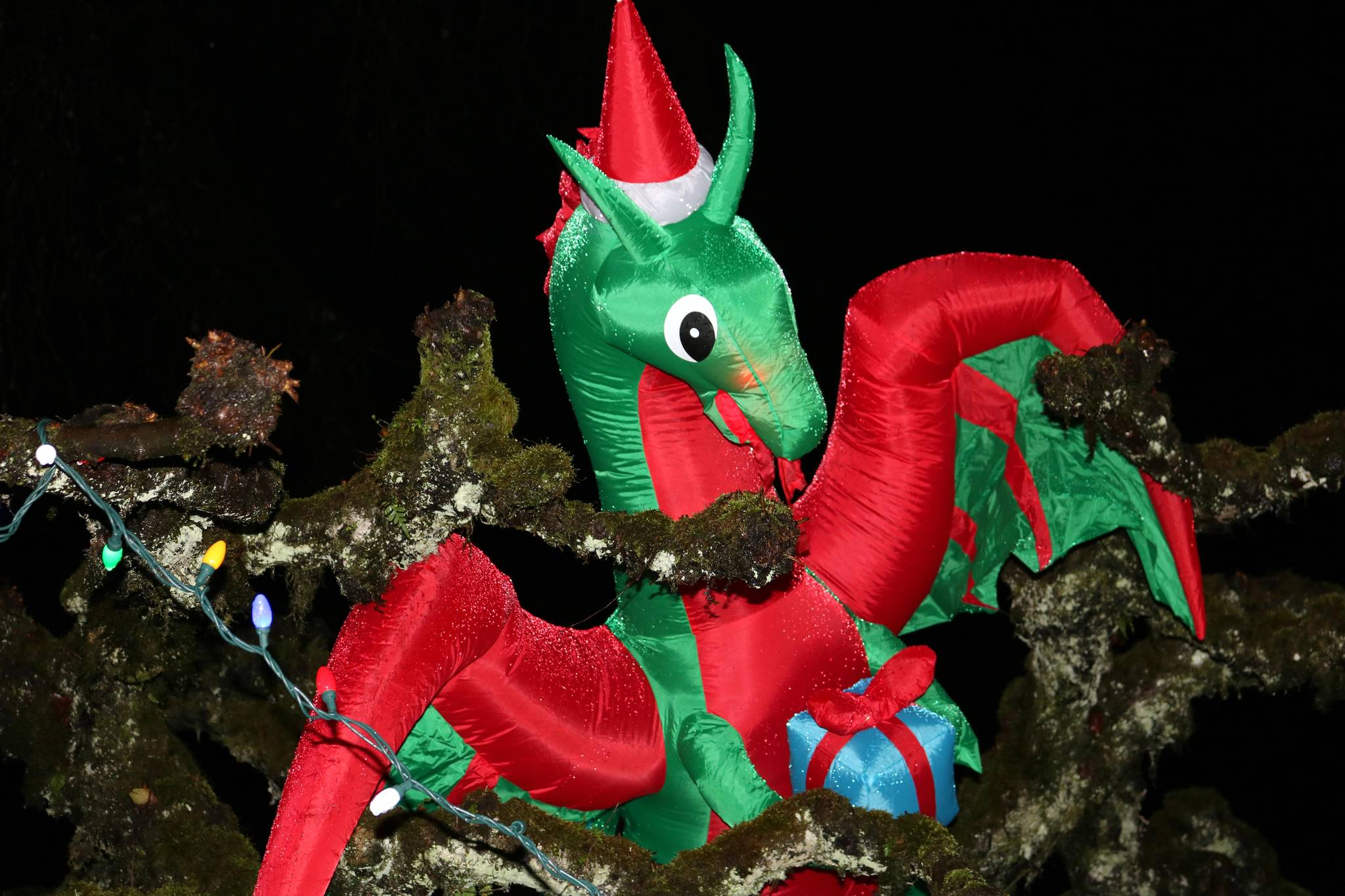 Dragons are perched high in the treetops at Williams Park. Miranda Fatur Langley Times