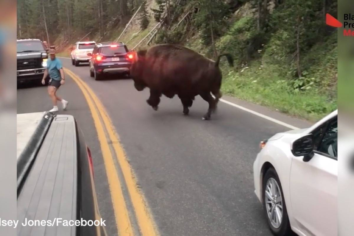 Wild animals, crazy stunts: Here's what went viral in B.C. for 2018