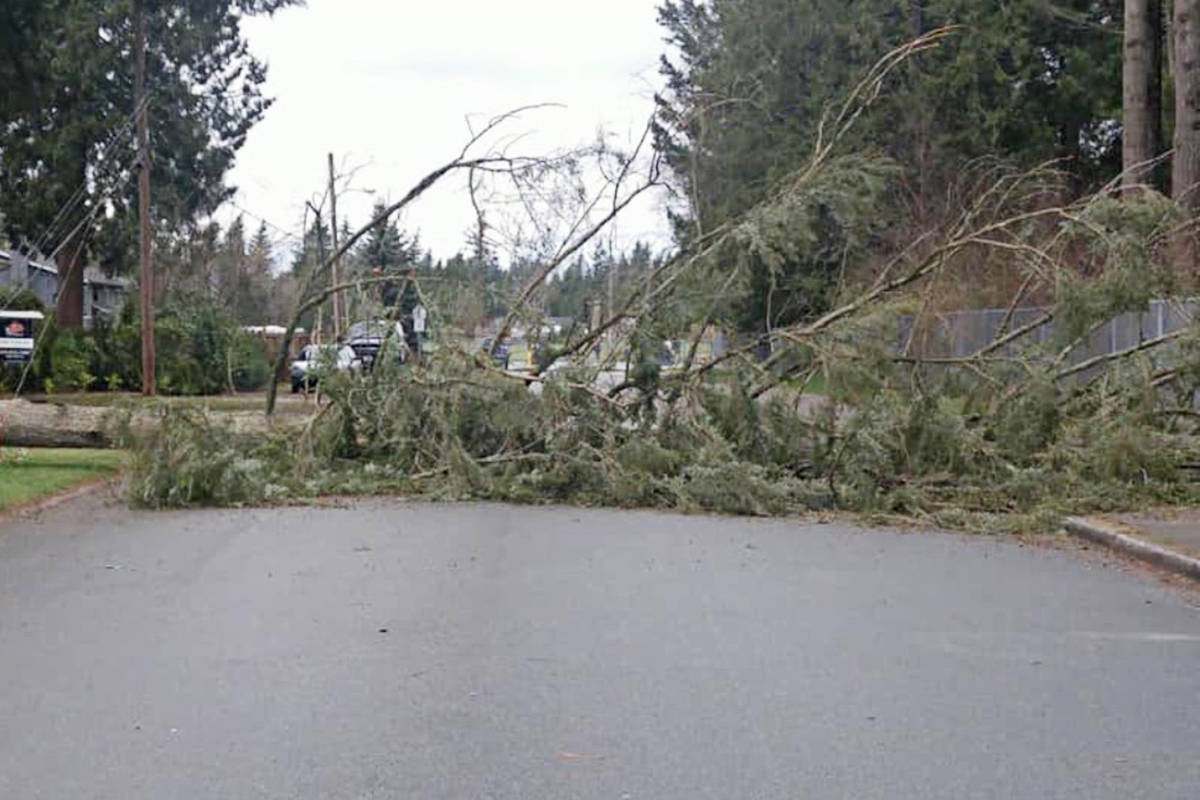 Storm fells trees, knocks out power across much of Langley