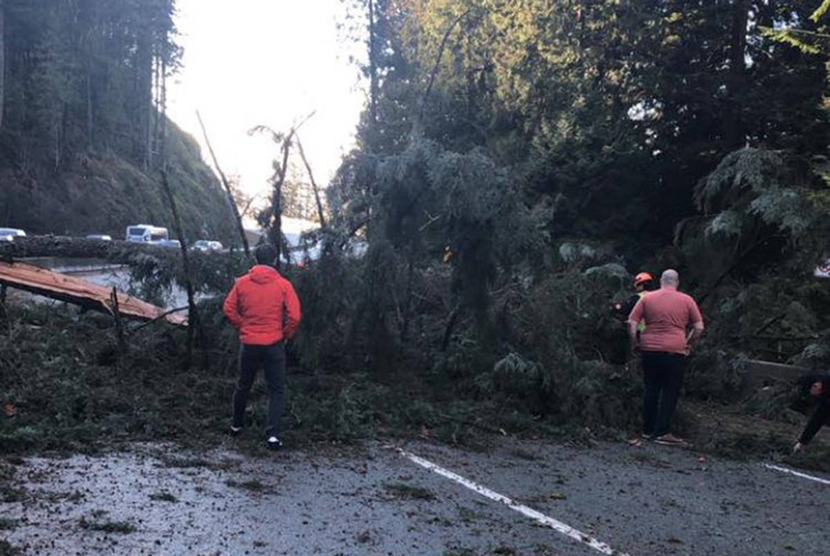 Trees downed along Highway 99. (@ewpeterson/Twitter)