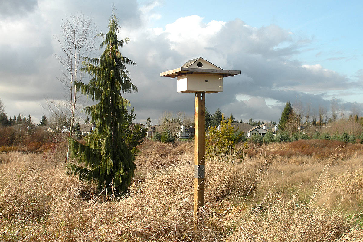 A new home in the Brydon Lagoon area of Langley is expected to be in high demand – an owl's house, that is. (Lilianne Fuller/Special to Black Press)