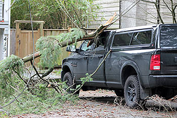 Langley fire crews rescued driver after tree hit car