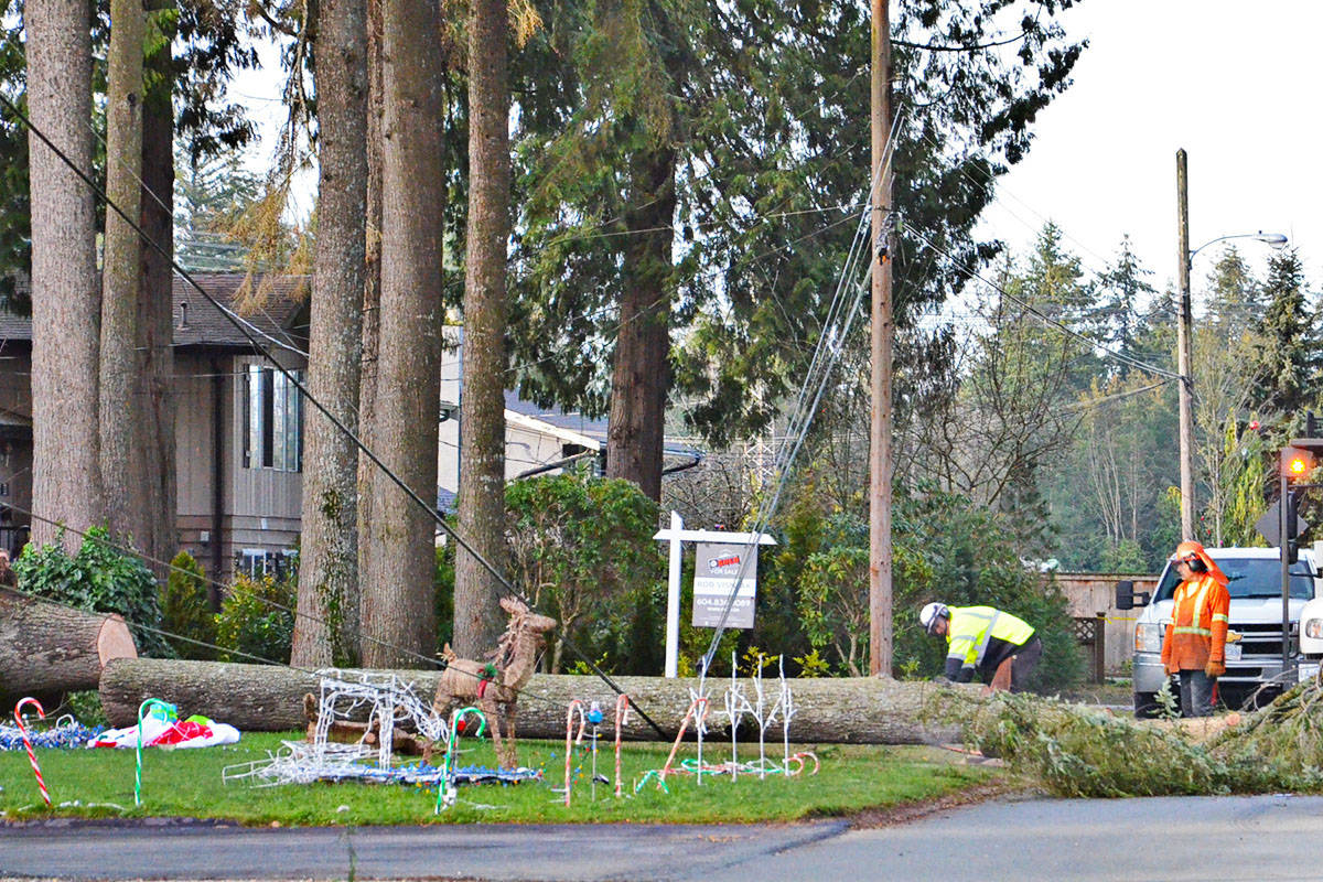 A tree fell across 44A Avenue near Upland Elementary and was being removed Friday morning. (Heather Colpitts/Black Press)