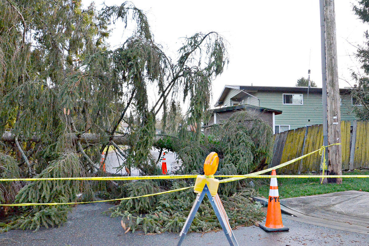 A tree in a yard at 208th Street in Langley City fell, blocking the street. (Heather Colpitts/Black Press)