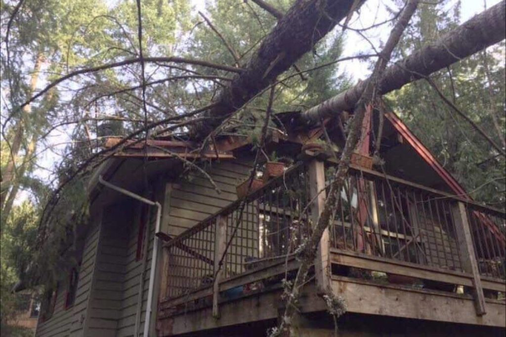Trees crashed down onto a house on Pender Island during this week's windstorm. (Christine Tam)