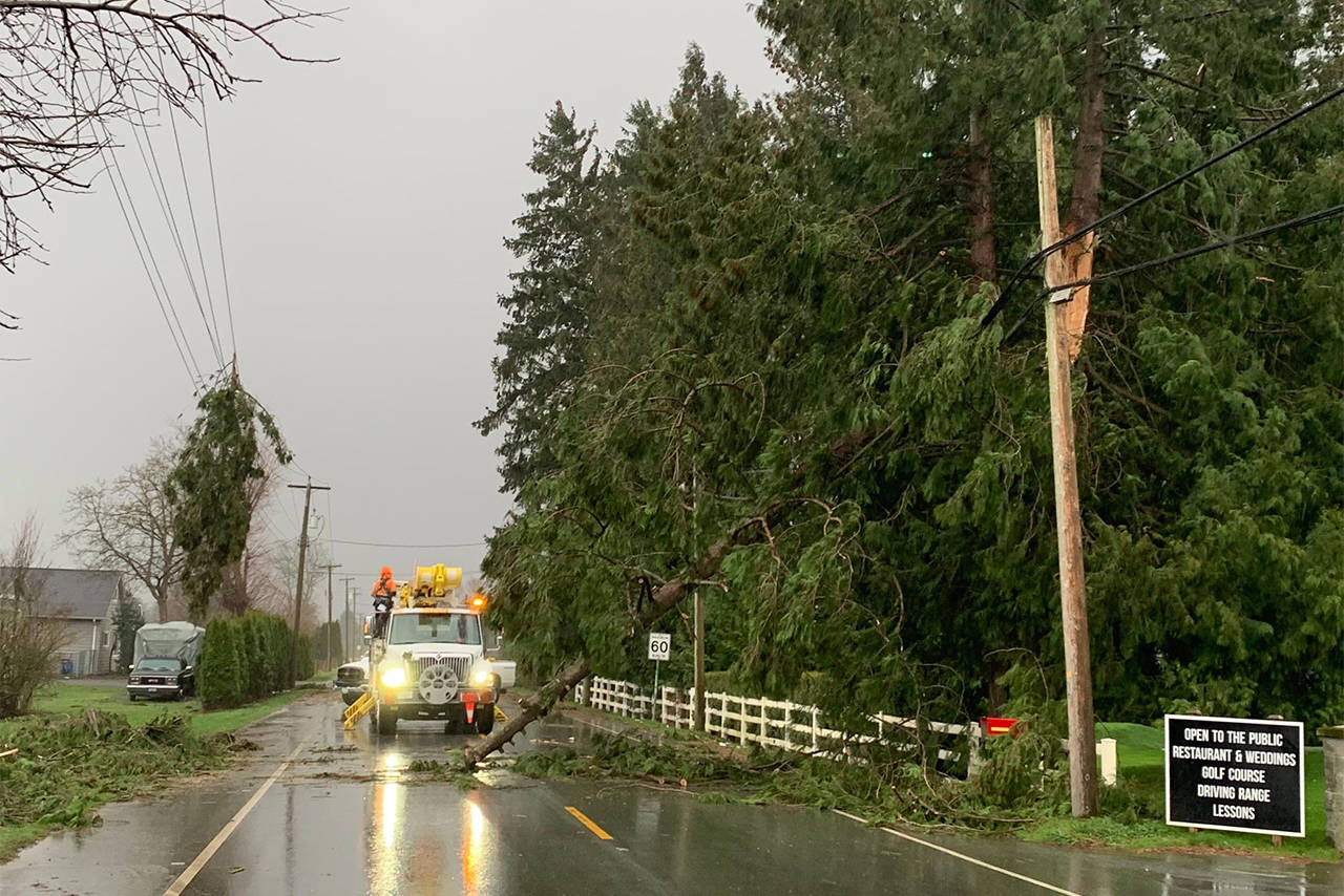 A tree down on the road and power lines on Yale Road West in front of Chilliwack Golf Club Thursday afternoon. (Paul Henderson/ The Progress)