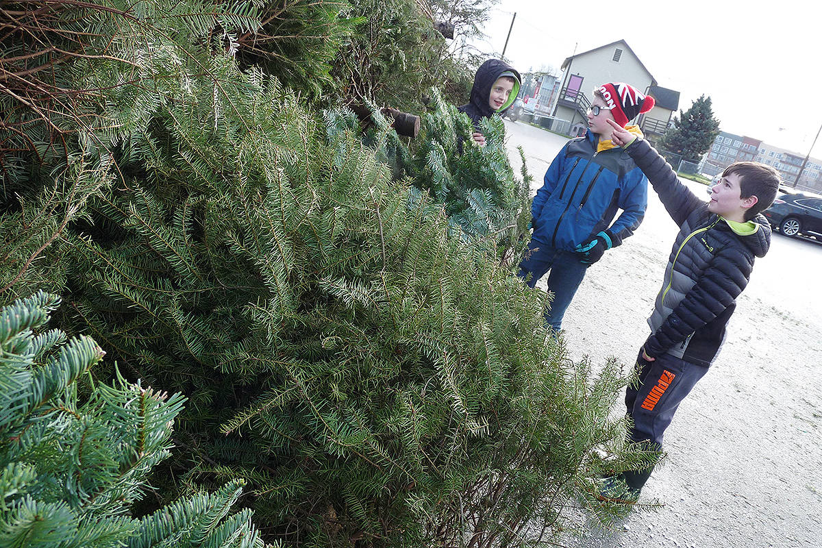Myles Nelson, Danny Nicolle and Carson Pettitt of the 1st Willoughby Scouts took part in chipping last holiday season. (Langley Times file photo)