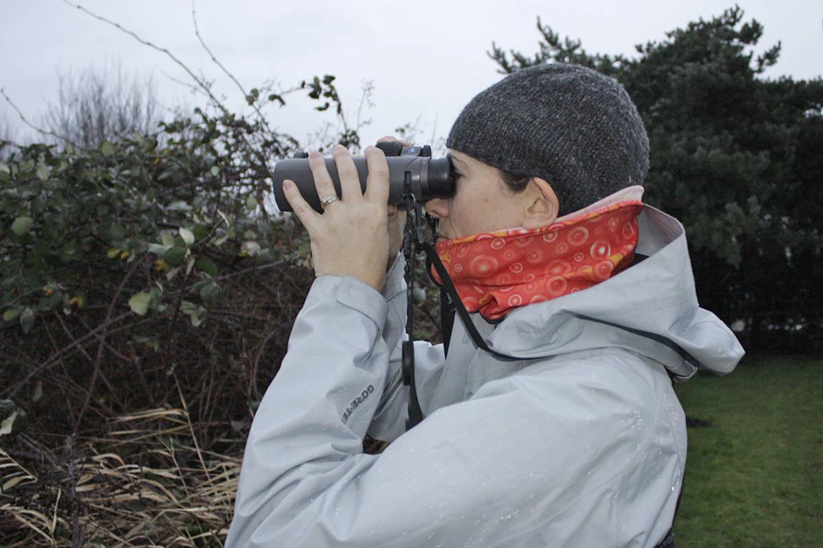 Langley bird count volunteer Devon Comstock was looking for species of birds in Milner on Saturday. Black Press photo