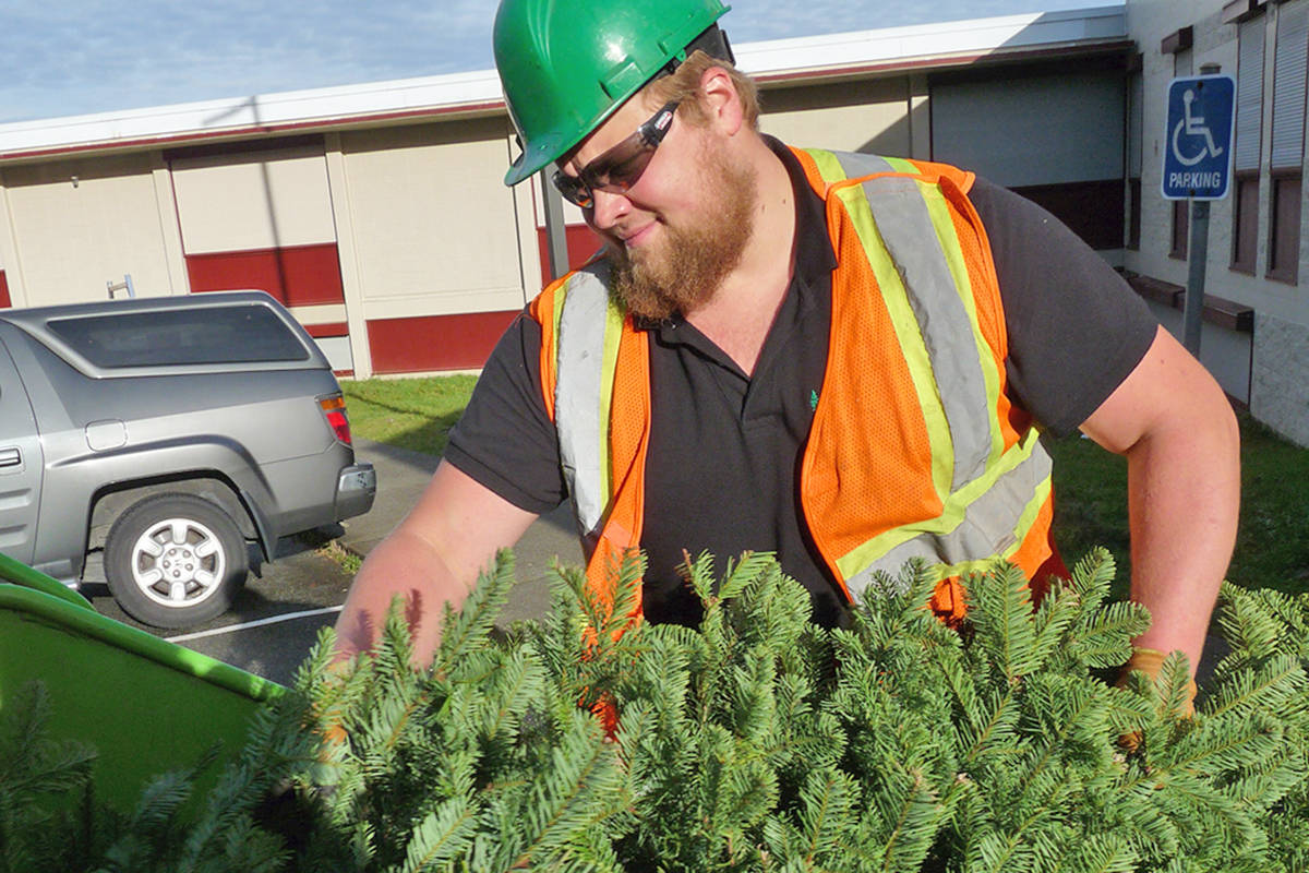 Jared Wiebe of Central Valley Tree Services loads a tree into the chipper at H.D. Stafford. Black Press photo