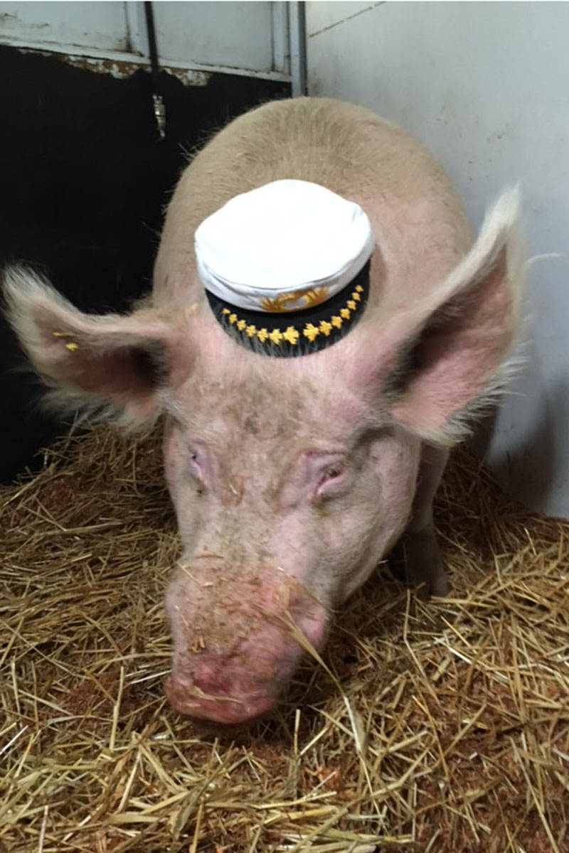 Theo poses with a captain's hat in his trailer on the B.C. Ferries. Courtesy Jayne Nelson
