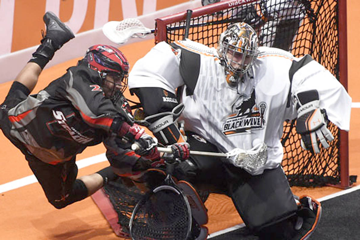 Stealth forward Evan Messenger, #22 of Delta dove at the Black Wolves net Friday night, in a 13-9 loss against the New England team. (Special to the Langley Advance)