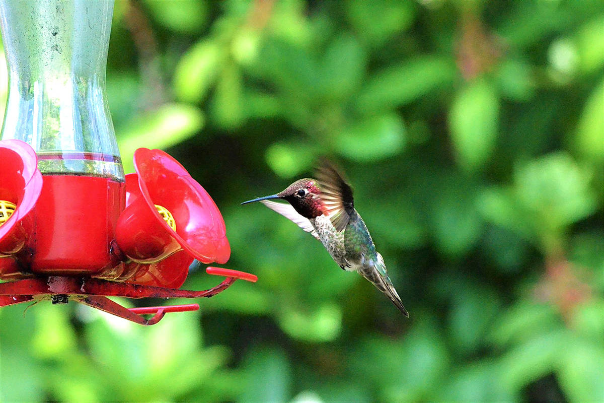 PHOTOS: So many of entries from Langley readers sharing their 'Wildlife in our Backyard' photos