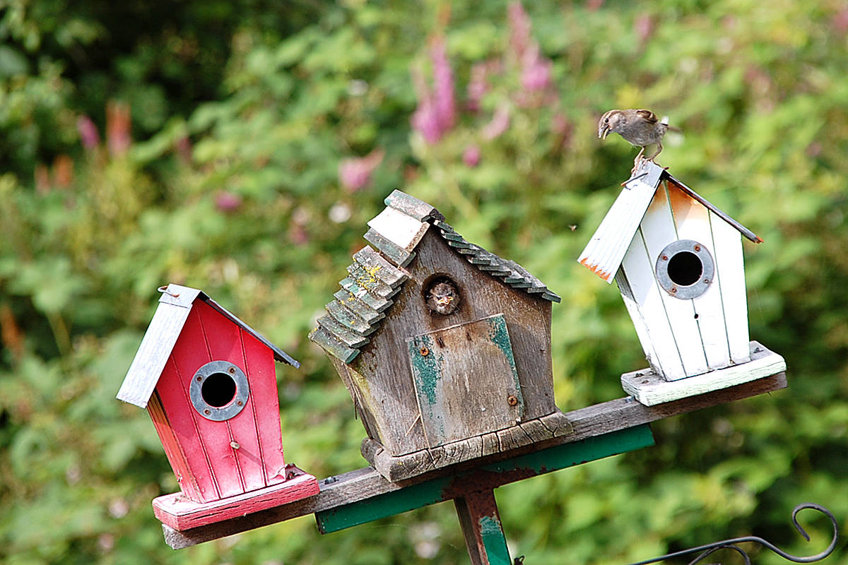 Bees, hummingbirds, and rabbits call Paul Garvin's backyard home in Walnut Grove. (Paul Garvin/Special to the Langley Advance)