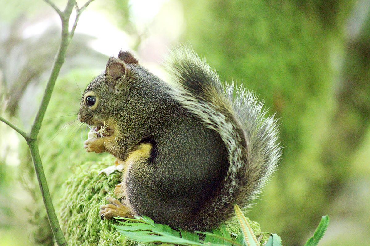 Jennie Jones captured a variety of wildlife in Campbell Valley Regional Park, including a frog, squirrel, and chickadee. (Jennie Jones/Special to the Langley Advance)