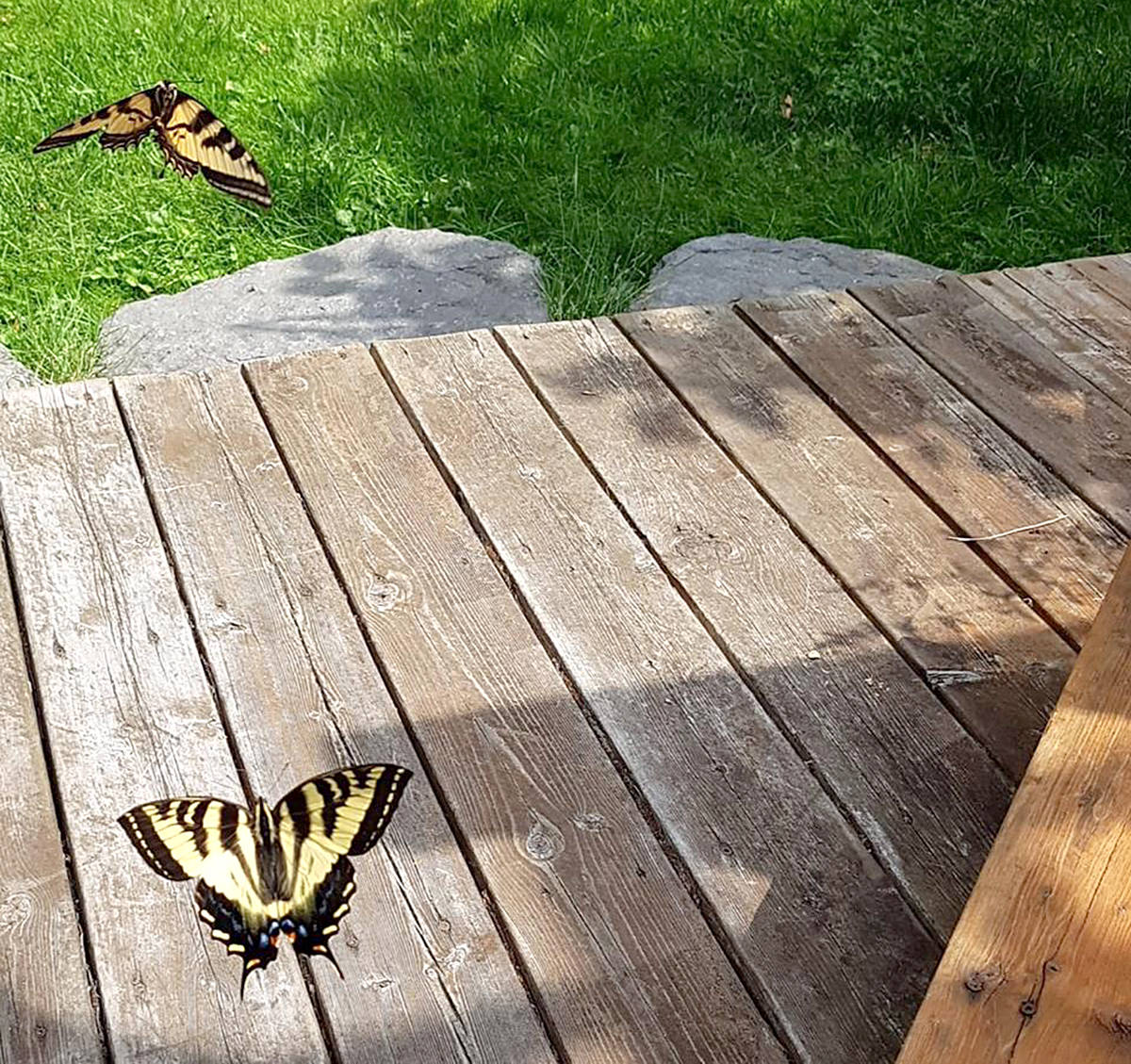 Tanya Henton captured all these wildlife pictures in the backyard of her Langley City home. (Special to the Langley Advance)