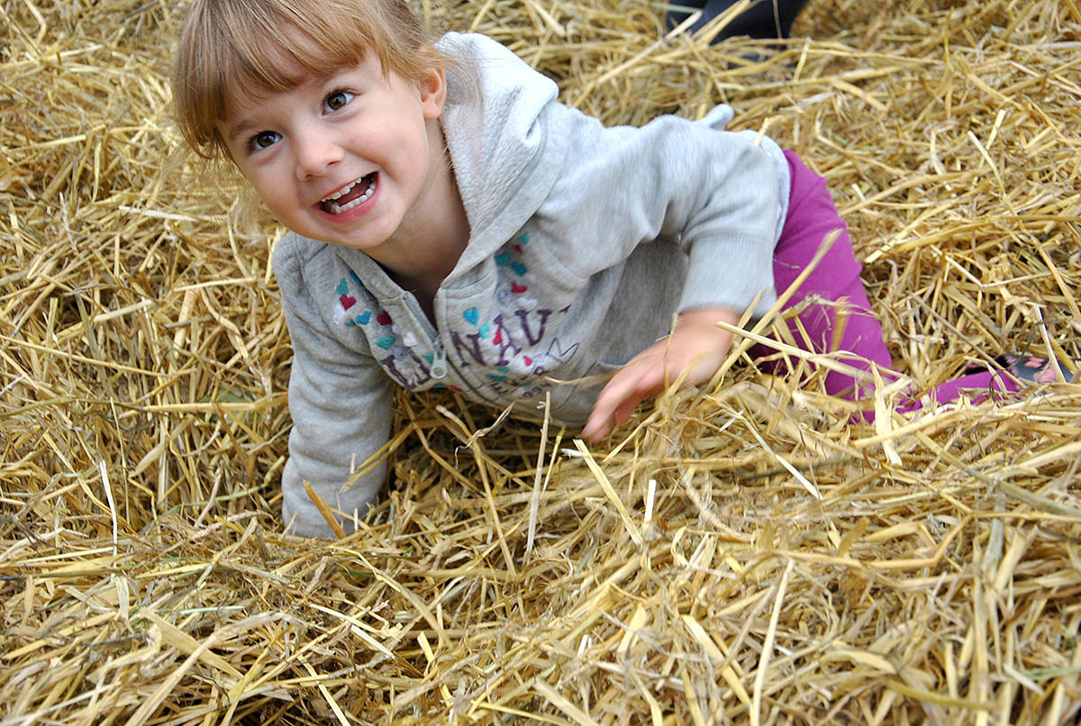 Dozens of young children were gleeful as they played outside during Heritage Apple Day Saturday in Derby Reach Regional Park, just west of Fort Langley. That included Paige Penner of Willoughby who played in the hay pile with several other children. (Roxanne Hooper/Langley Advance)