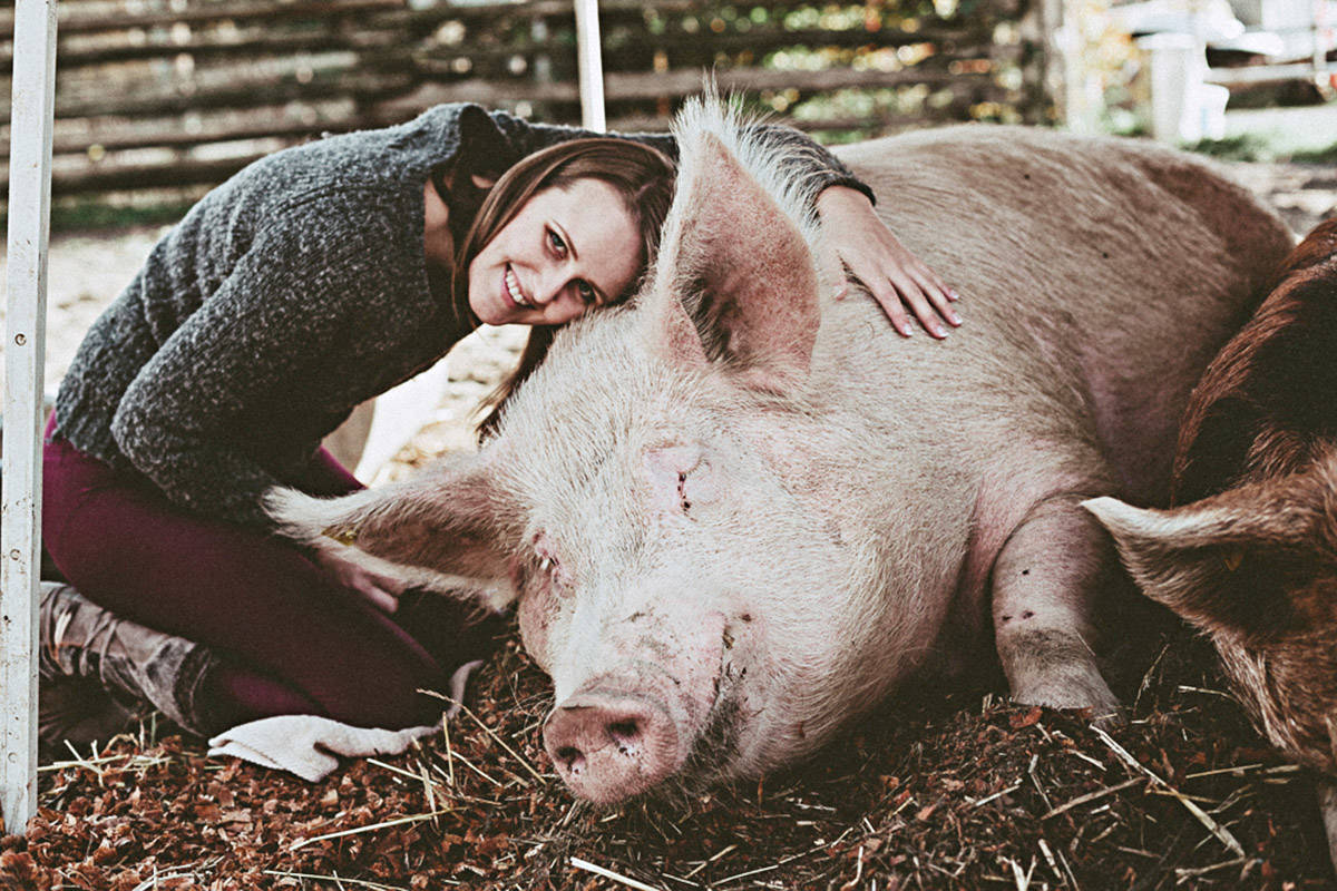 Theodore is a friendly pig, according to LAPS.