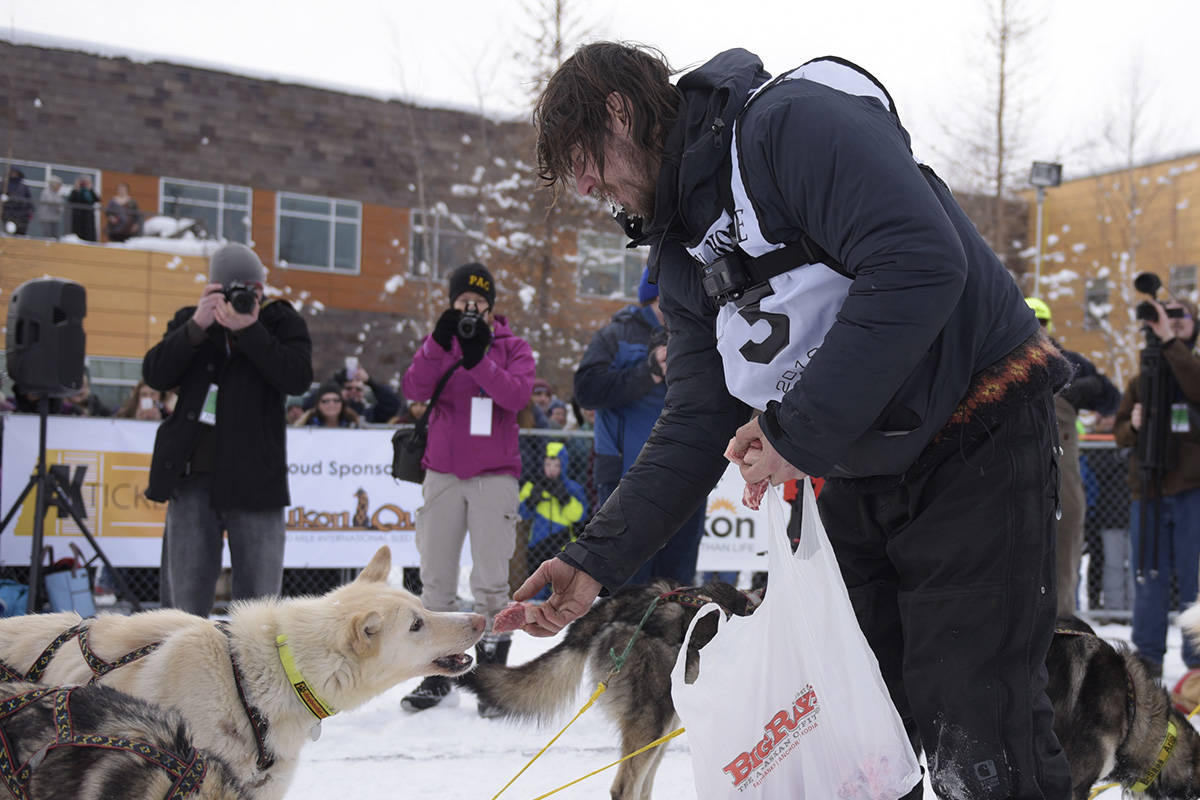 Brent Sass hands out steak to his dog team at the finish line after winning the 2019 Yukon Quest on Feb. 11 in Fairbanks, Alaska. (John Hopkins-Hill/Yukon News)