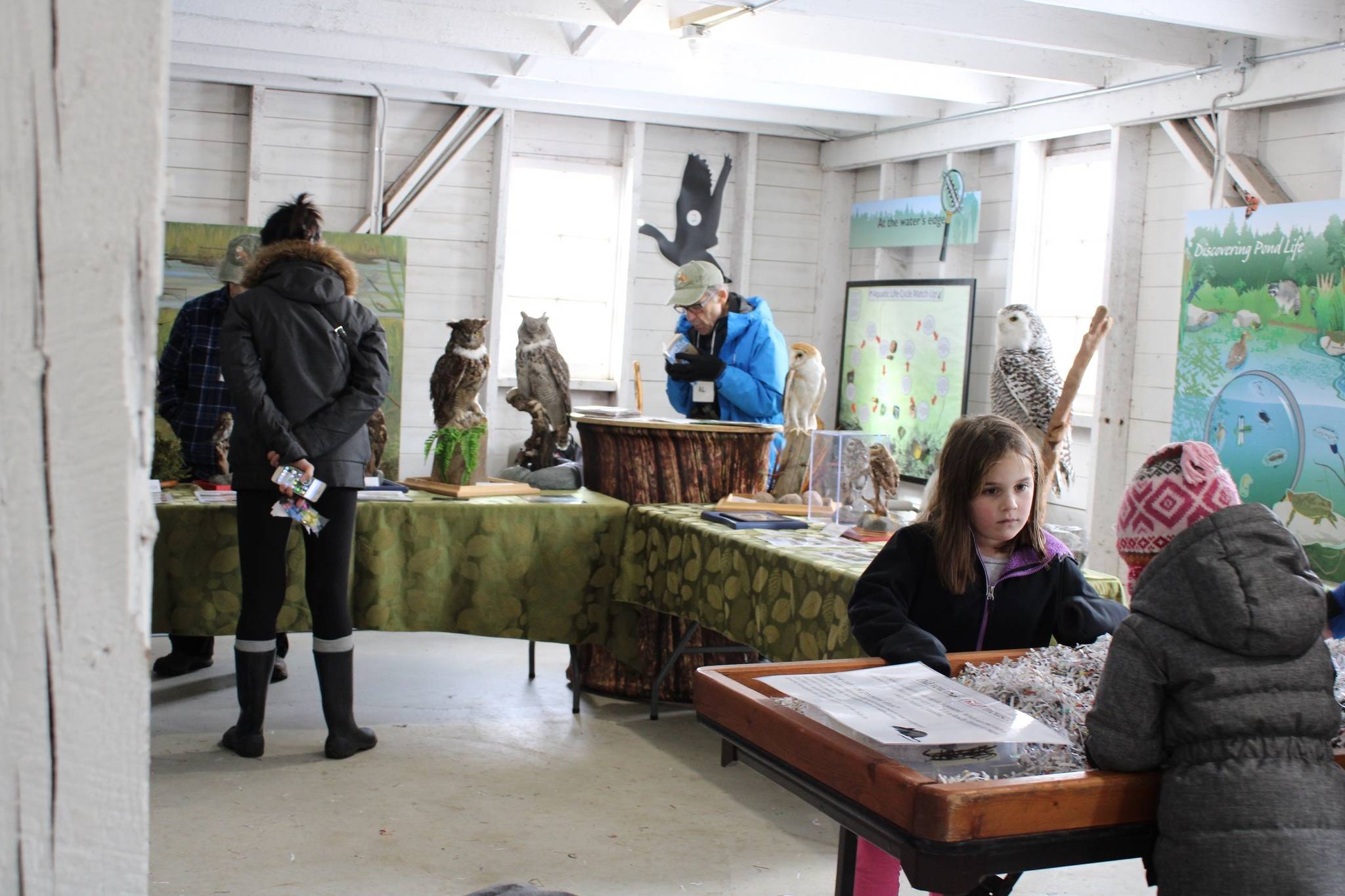Children enjoyed a day learning and hanging out with owls at Campbell Valley Regional Park on Saturday (Photo by Kieran O'Connor/Black Press Media)
