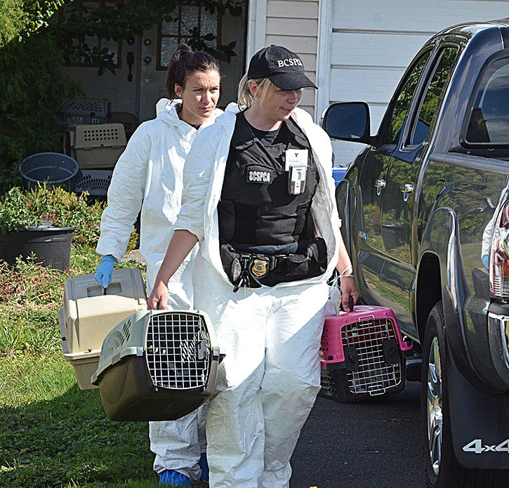 SPCA officials seized cats