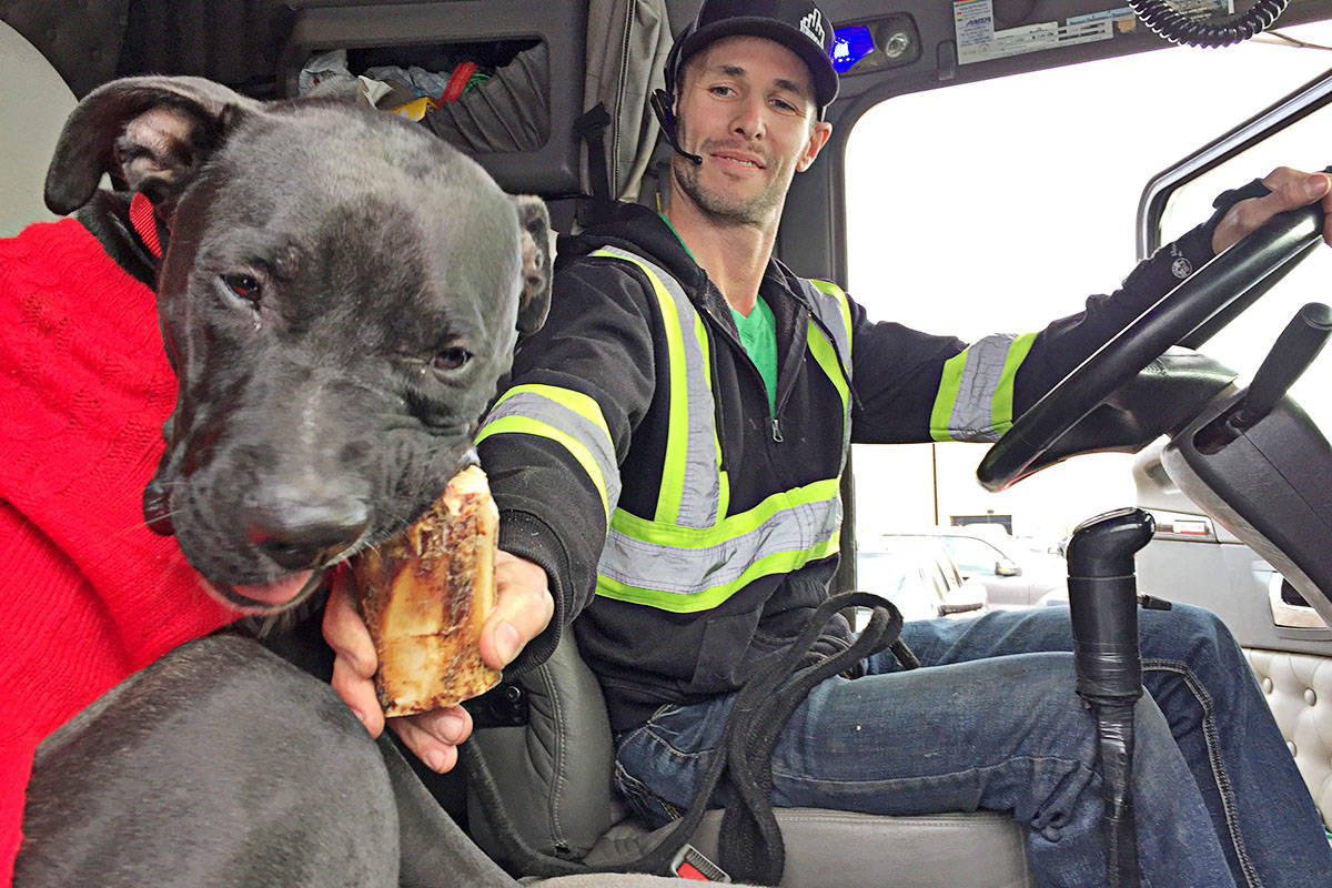 Truck driver Scott Stevens will have a passenger when he heads to Alberta as he helps reunite Frankie with his family. (Roxanne Hooper/Langley Advance)