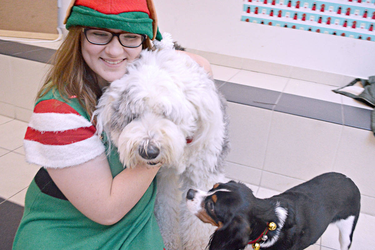 Claire Virtue donned an elf costume to help at the photos with dogs fundraiser at Walnut Grove Secondary. (Bailey Martens/Special to the Langley Advance)