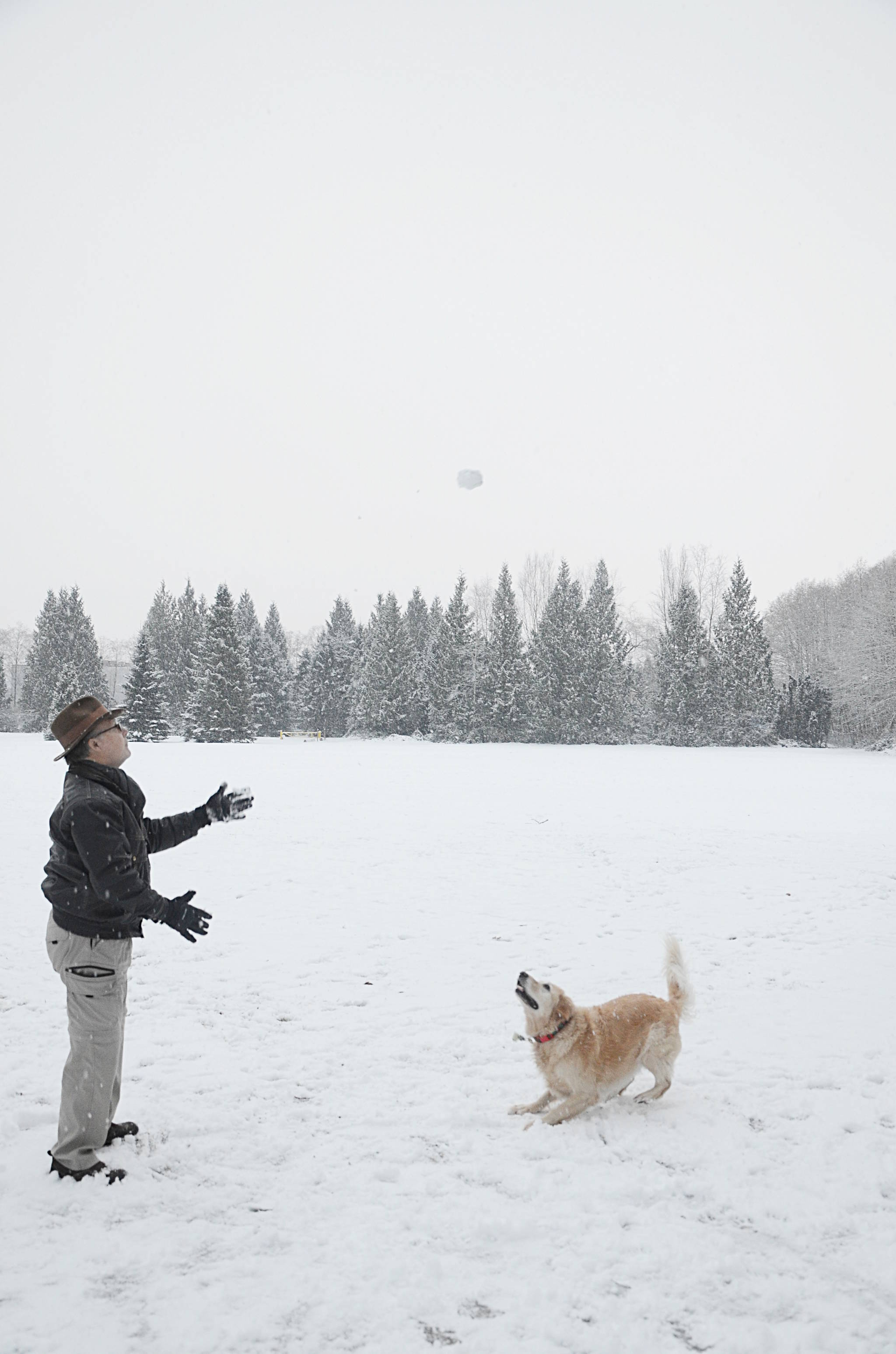 Bella and her owner, Harry Smith, headed out to Derby Reach Regional Park on Wednesday to enjoy the snow. (Matthew Claxton/Langley Advance)
