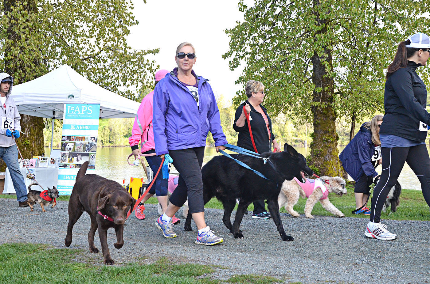 Dogs and their humans run to aid Langley animal shelter
