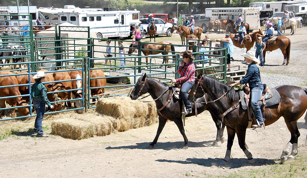 Senior girls were in the equestrian arena with their mounts on Saturday afternoon, trying their best to beat the clock in barrel racing. But there were hundreds who gathered to compete, watch, judge, and support the young cowboys and girls this past weekend in Brookswood. (Roxanne Hooper/Langley Advance)