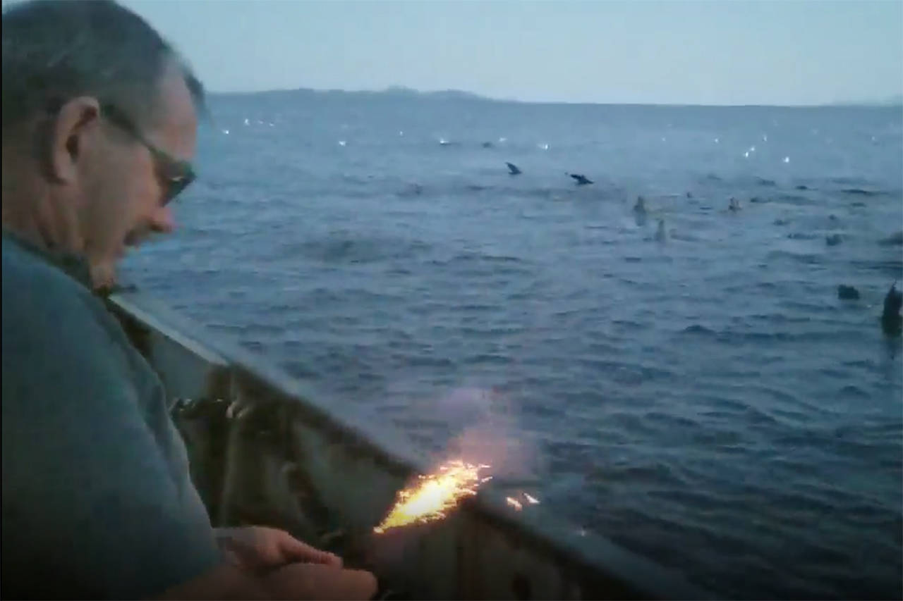 A screenshot from a video posted to the Pacific Balance Pinniped Society Facebook group shows a man lighting a bear banger which he later throws at a swarm of stellar seals (Facebook/Pacific Balance Pinniped Society)
