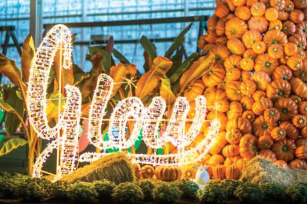 POLL: Do you think the Glow Christmas and Glow Harvest events at Langley's Darvonda Nurseries should be allowed to continue?
