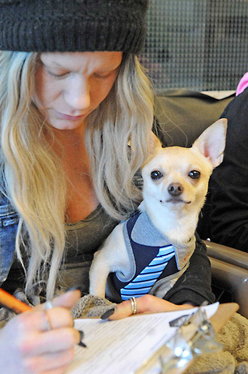 Savannah fills out a form for London, a dog she found abandoned in Surrey. Dan Ferguson Langley Advance Times