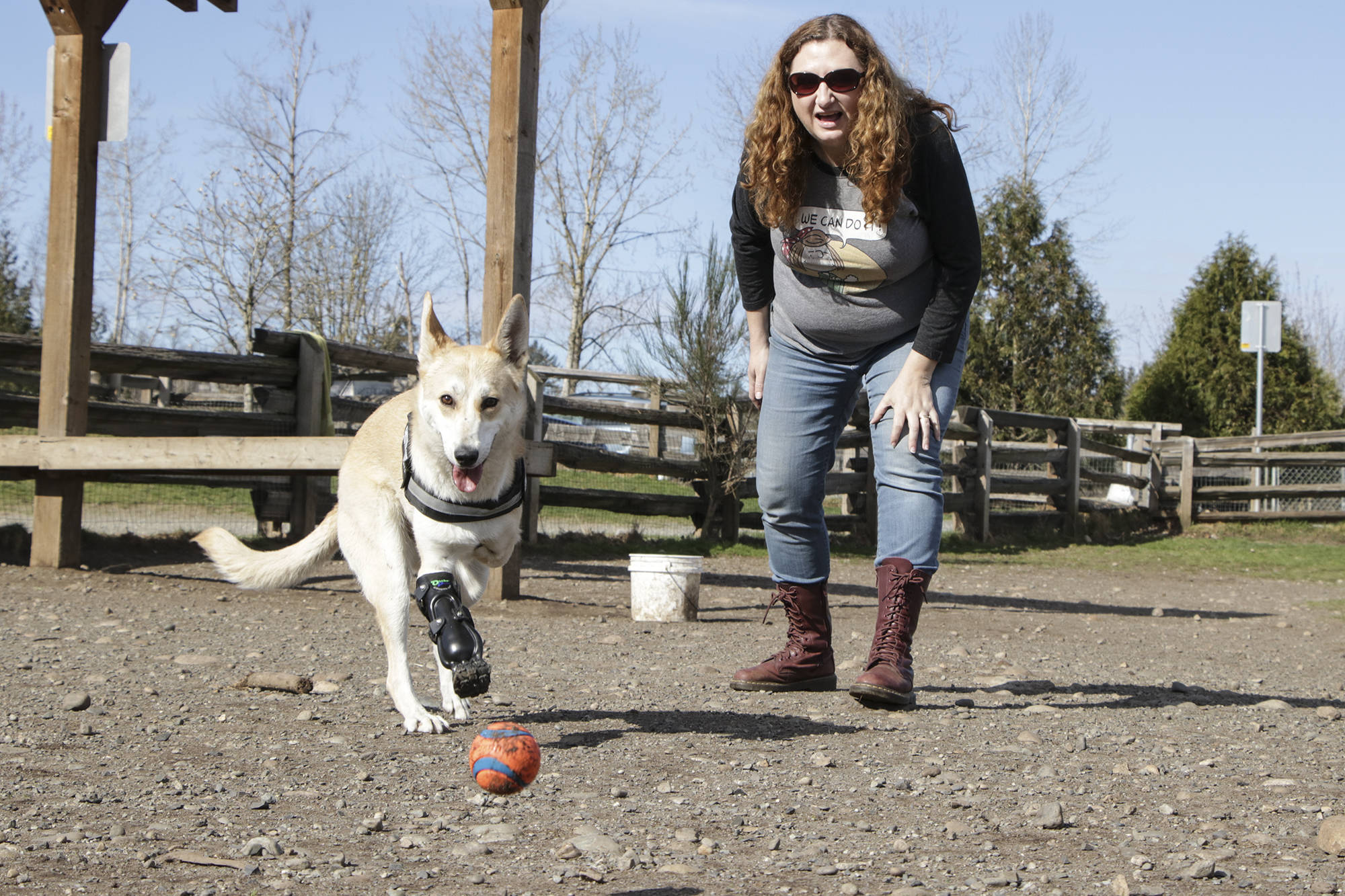 Roo chases after a ball tossed by her human Julie Horncastle at the Clearbrook off-leash dog park in Abbotsford. Roo just received a new prosthetic leg a few days ago and is still navigating life with a third leg. Dustin Godfrey/Abbotsford News
