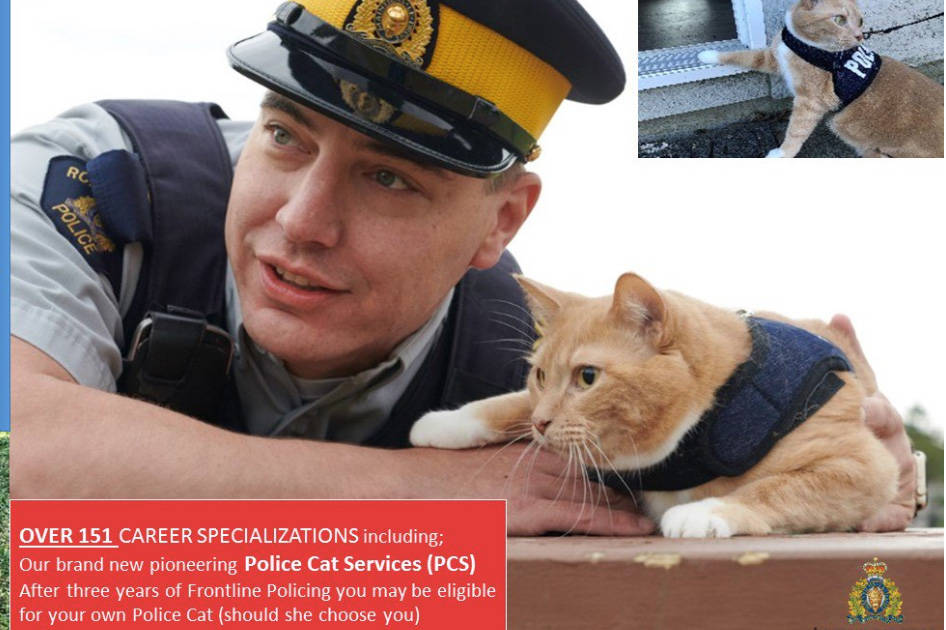 Police Cat Services: The RCMP's purrfect way to fight crime