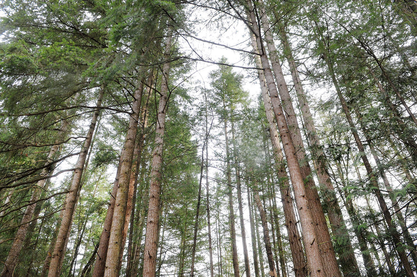 POLL: Tree protection bylaw for Langley Township?