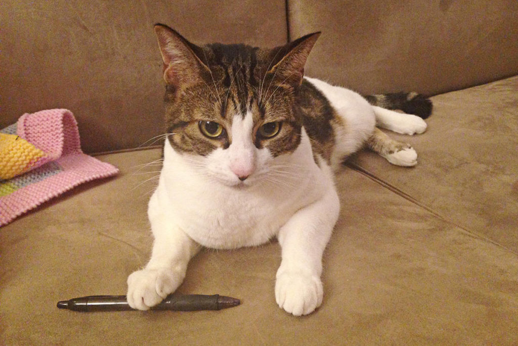 Dax, the cat who owns the human who writes this column. (Matthew Claxton/Langley Advance Times)
