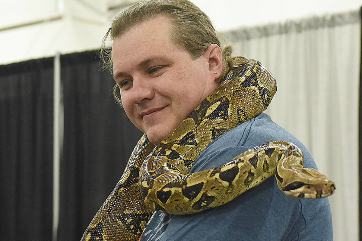 Seven-foot boa constrictor briefly on the loose in a Fraser Valley neighbourhood