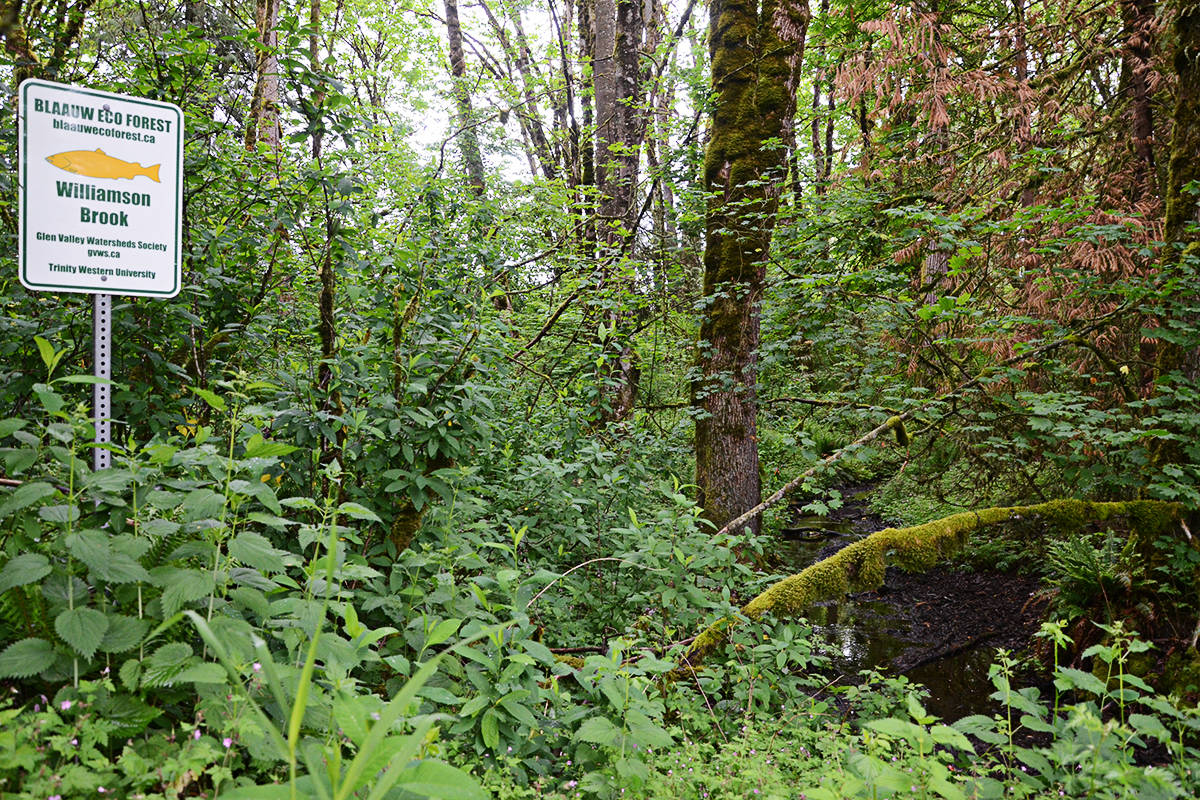 The Blaauw EcoForest, across from the site of a proposed marijuana farm, is one of the concerns of neighbours of the site. (Matthew Claxton/Langley Advance)