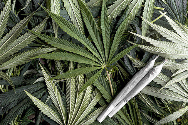 Langley Township takes first steps towards retail marijuana
