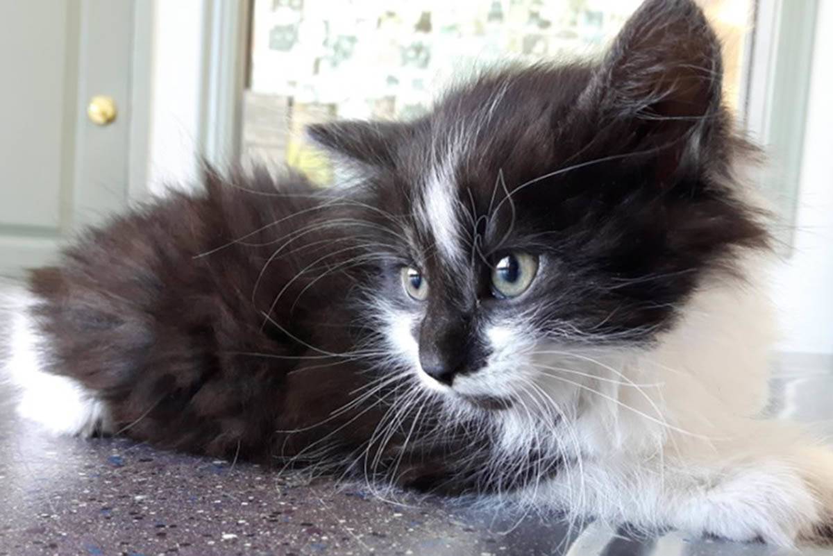 Animal Control Services is seeking information on a kitten discovered inside a small black bag in a garbage bin at Hillside Mall on Monday. (Facebook/Victoria Animal Control Services)