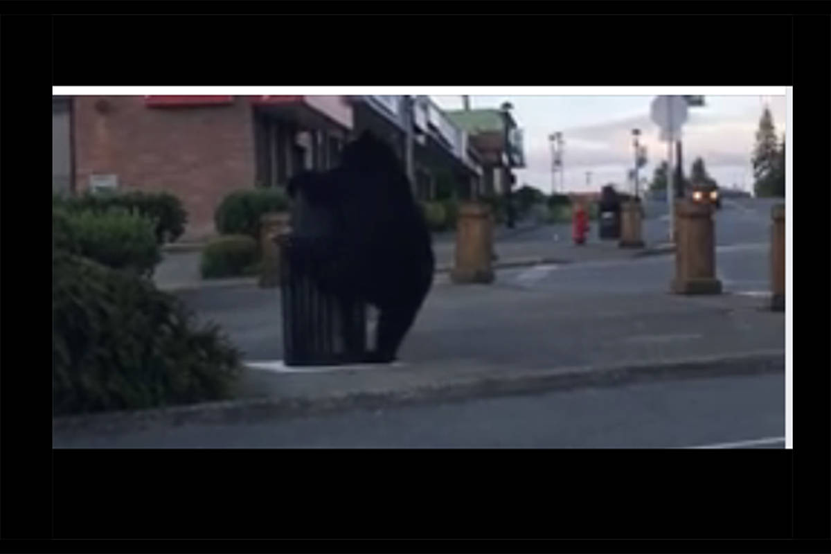 VIDEO: Bear picks fight with garbage can in the middle of B.C. town