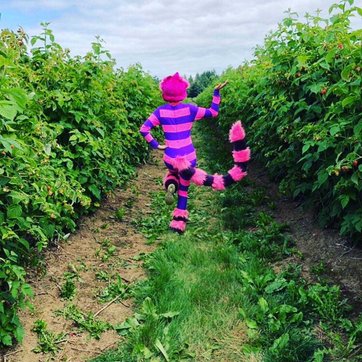 Follow the Cheshire Cat to the Mad Hatter's Raspberry Tea Party at Driediger Farms on Sunday, July 14, from noon to 3 p.m.